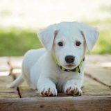 【韓国犬食】最大の「養犬場」解体‼︎犬の残虐極まりない殺し方の理由⁉︎