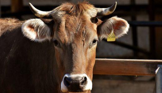 【北海道】牧場から逃げた牛と特急列車が衝突‼︎牛が脚の骨を折る