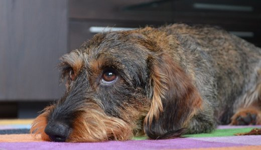 【犬をレンチで殺す】別居中の夫が妻の飼い犬に八つ当たり‼︎札幌豊平