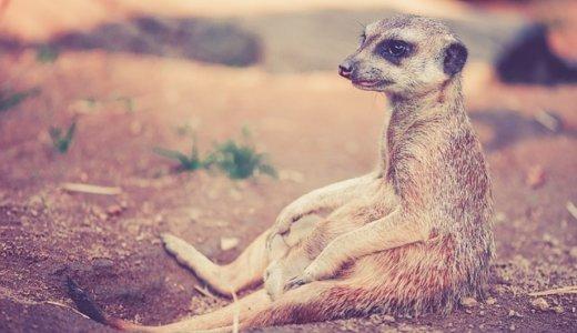 【心がつらい時】動物園が自殺防止に一役‼︎園長のオススメの動物は?
