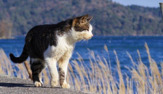 『猫を連れ去る男』女性が「人間じゃない」‼︎SNSで涙の訴え