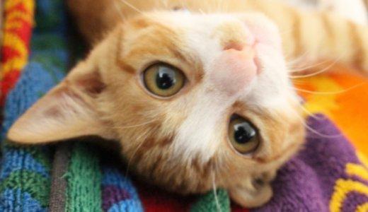 【鮫島勝利】猫の「はとちゃん」を連れ去り捨てる‼︎顔画像と猫虐待