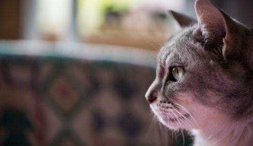 【苫小牧】アパートの車庫に残された猫の無残な死骸が‼︎