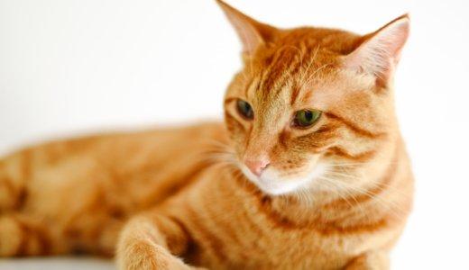 【札幌2歳児虐待死】容疑者2人の部屋に飼育放棄された猫21匹