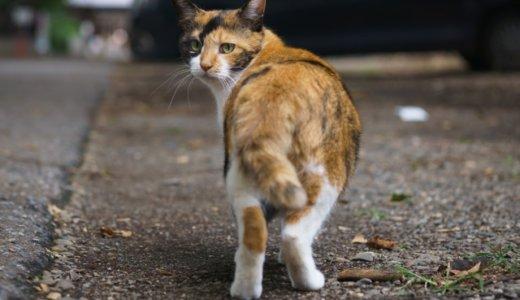 【猫100匹虐殺男】新村健治・仏壇の近くにセーラー服の異常性
