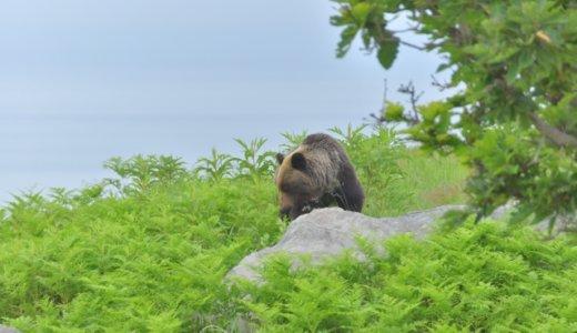 『札幌市ヒグマ出没情報』とは?豊平区と西区にもヒグマが出没