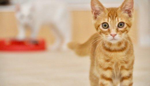 猫虐待の新村健治。判決を不服として控訴‼︎猫の命よりも自分の権利?