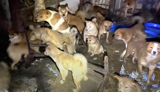【動物虐待】田中大作(55)空き家で犬66頭を劣悪な環境で飼育。排泄物などが膝くらいの高さに。SNSは?