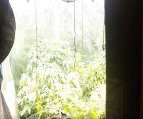 札幌市の田中謙治(35)と田中亨(30)兄弟が大麻を密売目的で栽培。「消えるSNS」や暗号資産などの匿名ツールを駆使。兄弟の顔画像は?