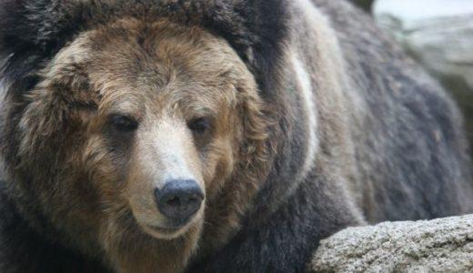 熊に目潰し