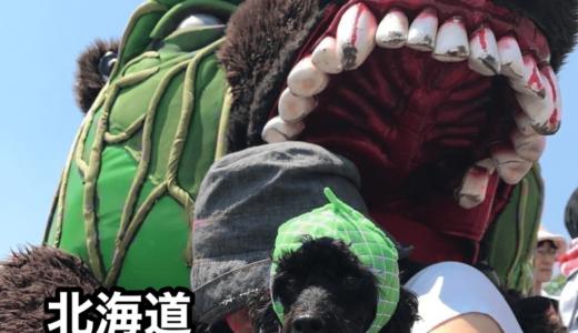 『札幌市ヒグマ出没注意報』ヒグマが市街地に出没⁉︎続『キタキツネ』と『メロン熊』も。