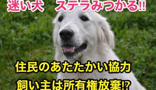 『迷い犬ステラみつかる』飼い主は所有権を放棄‼️