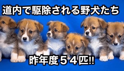 【道内で駆除される野犬たち】昨年度54匹‼︎