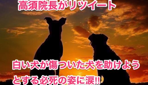 【高須院長がリツイート】白い犬が傷ついた犬を助けようとする必死の姿に涙‼︎