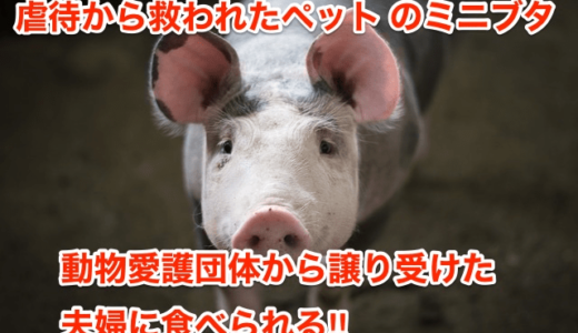 【虐待から救われたペットのミニブタ】動物愛護団体から譲り受けた夫婦に食べられる⁉︎
