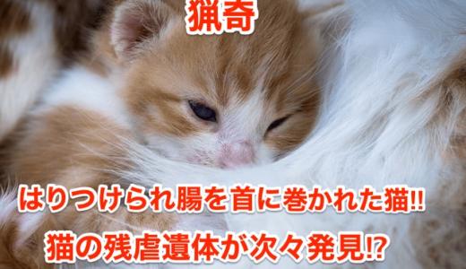 【猟奇】はりつけられ腸を首に巻かれた猫‼︎猫の残虐遺体が次々発見⁉︎