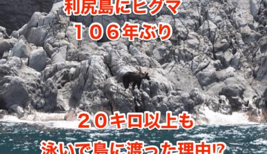 【利尻島にヒグマ】106年ぶり‼︎20キロ以上も泳いで島に渡った理由⁉︎