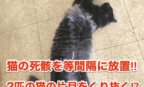 【釧路猫虐待】猫の死骸を等間隔に放置‼︎2匹の猫の片目をくり抜く⁉︎