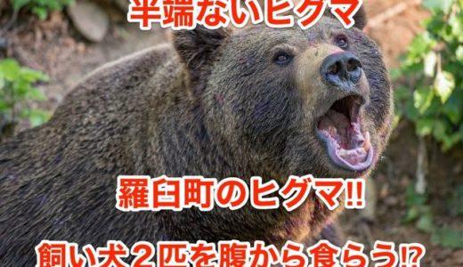 【半端ないヒグマ】羅臼町のヒグマ‼︎飼い犬2匹を腹から食らう⁉︎