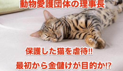 【動物愛護団体の理事長】保護した猫を虐待死‼︎最初から金儲けが目的か⁉︎